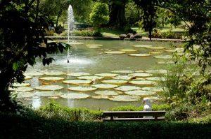 สวนพฤกษชาติโบกอร์ โบตาปิคอล การ์เด็น (Bogor Botanical Garden)